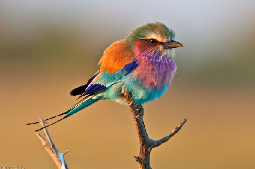 Rollerbird Whirring Colors Ayakkabı - MegaPlus Dergisi 34. Sayı